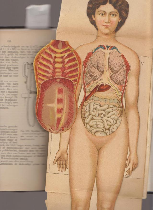 ALBERTS, DR. J.E. - Het ontstaan, de ontwikkeling en de geboorte van den mensch.